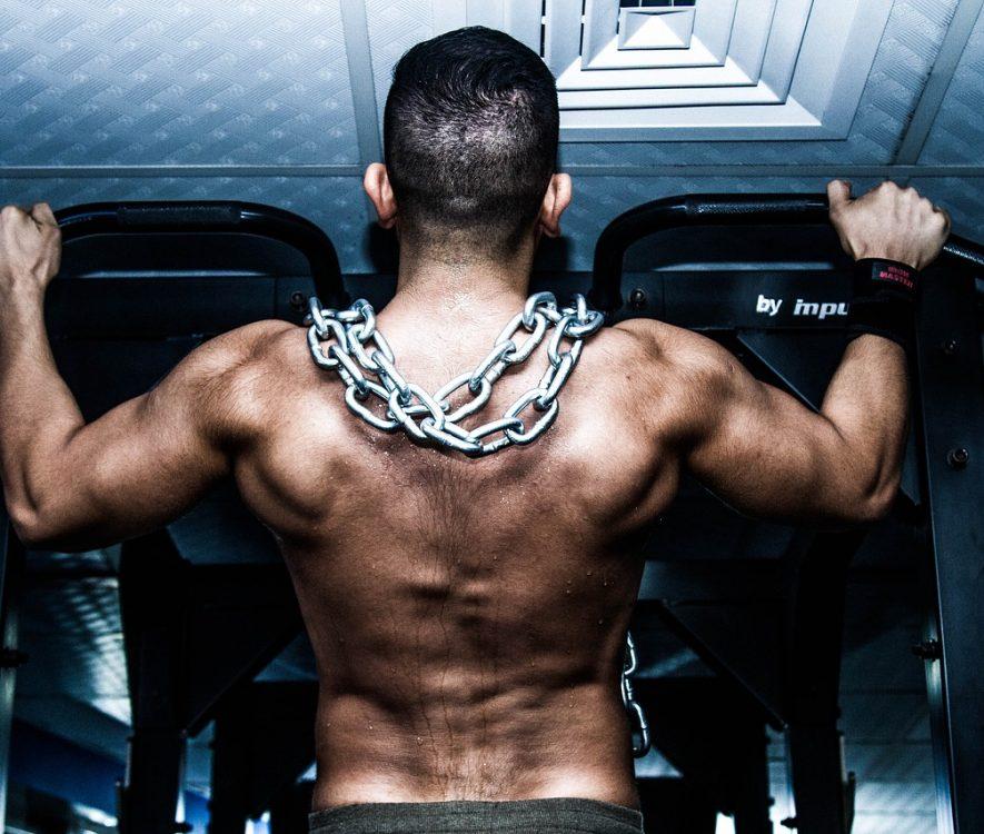 Gain Muscles